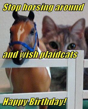 animals - 8571090432