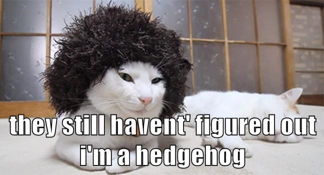 they still havent' figured out i'm a hedgehog