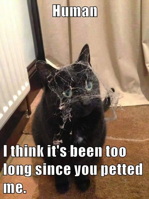 animals cat time cobwebs long since caption petted - 8571132416
