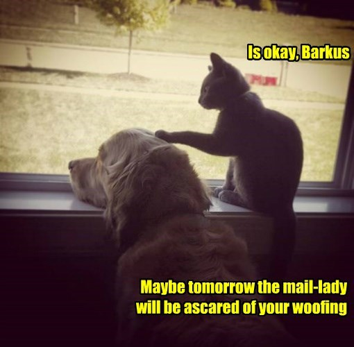 woofing,cat,dogs,scared,caption,Okay,tomorrow,mail,barkus,lady