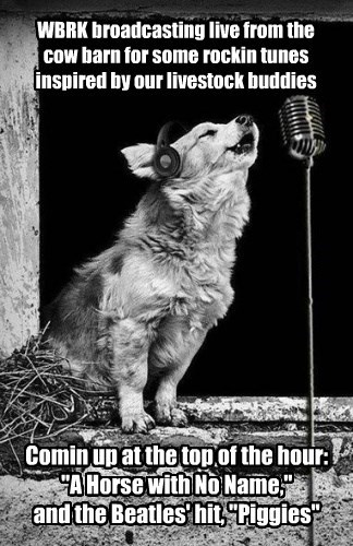 radio dogs captions - 8571222016