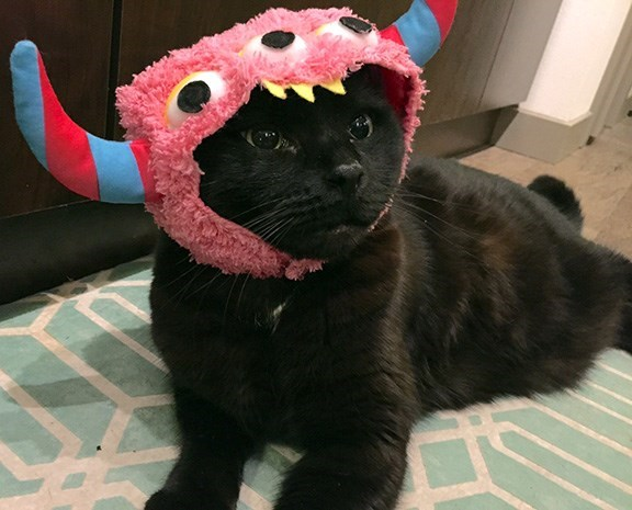 cute cats costume What Have You Done To Me? I Am a Monster