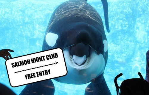 omnomnom,club,salmon,killer whale,funny