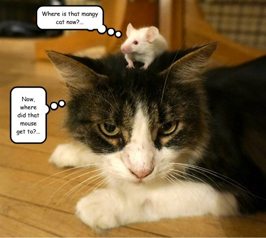 cat caption funny mouse - 8571377152