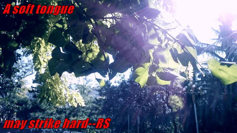 A soft tongue  may strike hard--RS