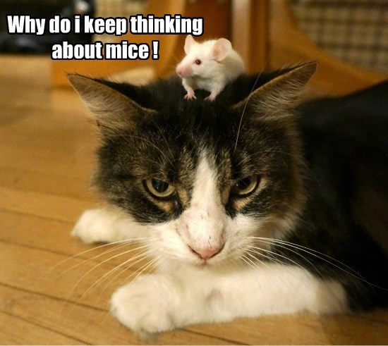 Why do i keep thinking about mice !
