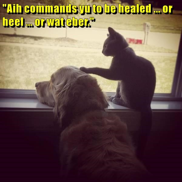 animals Command caption dogs healed whatever heal you