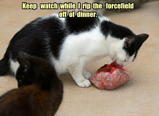 force field,caption,Cats,funny