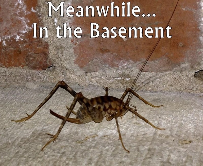 Meanwhile...                 In the Basement