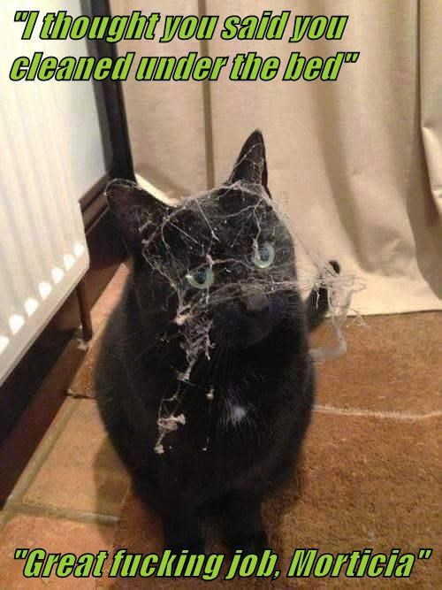 animals cat said you - 8571593984