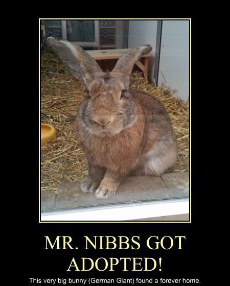 MR. NIBBS GOT ADOPTED!