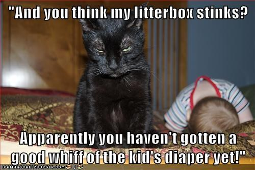 Babies,captions,litter box,Cats,funny