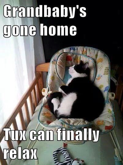 Grandbaby's gone home  Tux can finally relax
