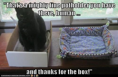 """That's a mighty fine potholder you have there, human ... and thanks for the box!"""