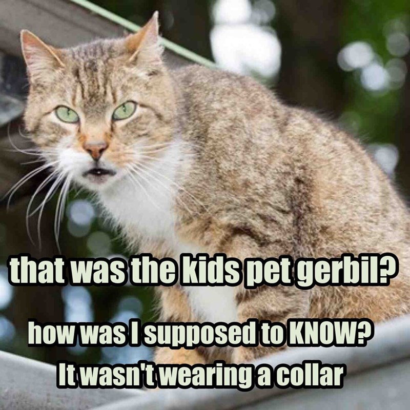 having a kitteh requires all critters be labeled