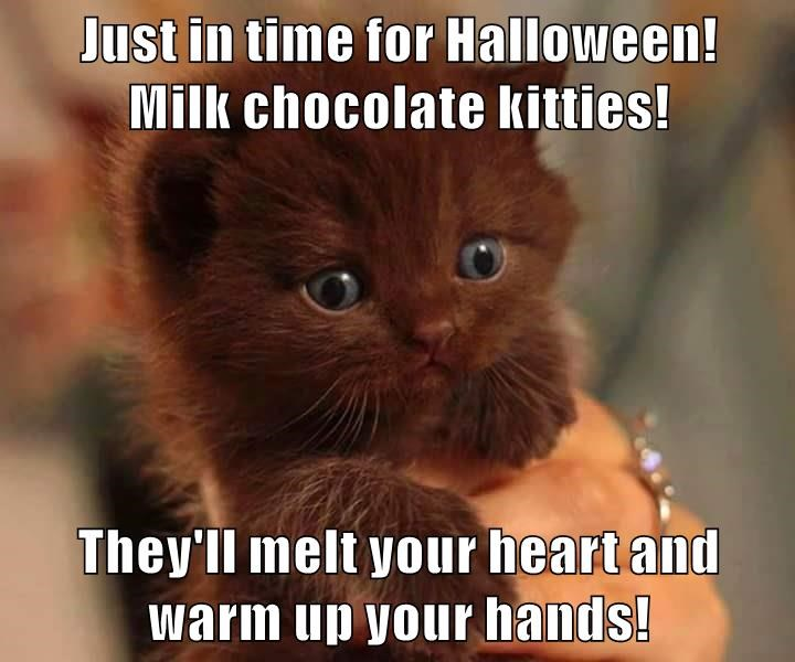 Just in time for Halloween!                    Milk chocolate kitties!   They'll melt your heart and warm up your hands!