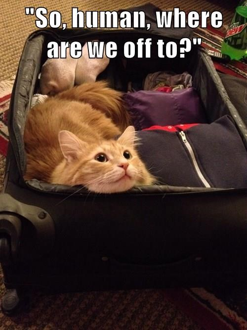 animals captions cute Travel Cats - 8571906048