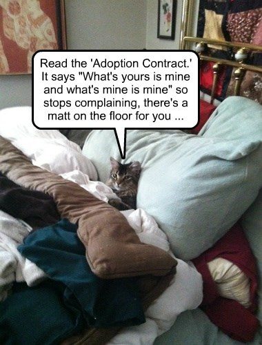 adoption,caption,Cats,funny