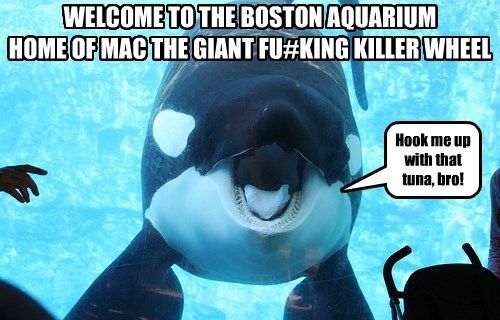 WELCOME TO THE BOSTON AQUARIUM HOME OF MAC THE GIANT FU#KING KILLER WHEEL