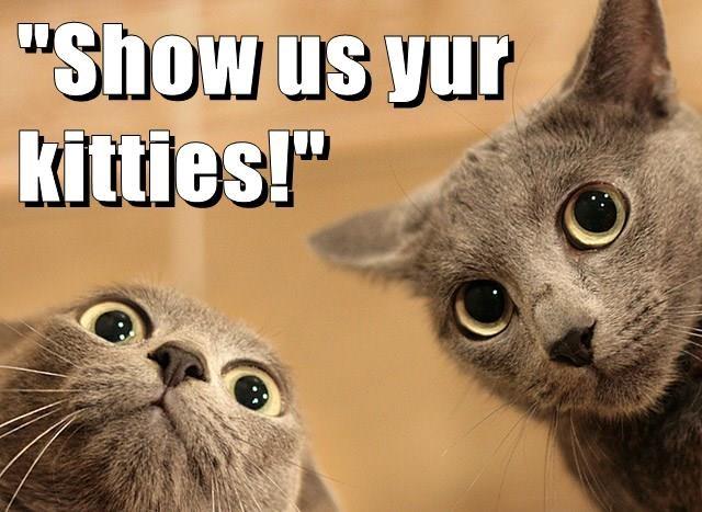 """""""Show us yur                                              kitties!"""""""