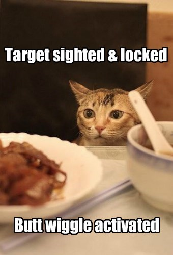 butt stuff food caption Cats funny - 8572123392