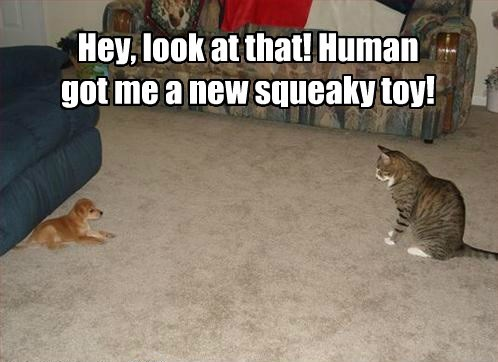 Hey, look at that! Human got me a new squeaky toy!
