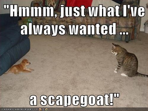 animals dogs captions cute scapegoat Cats - 8572141824