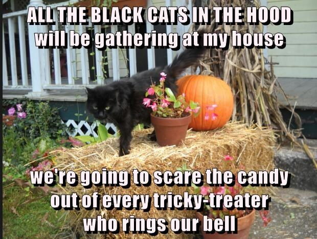 ALL THE BLACK CATS IN THE HOOD                                will be gathering at my house  we're going to scare the candy                     out of every tricky-treater                                  who rings our bell