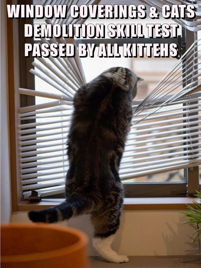 WINDOW COVERINGS & CATS DEMOLITION SKILL TEST PASSED BY ALL KITTEHS