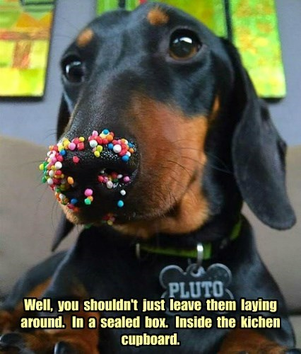 dogs sprinkles captions cute - 8572322816