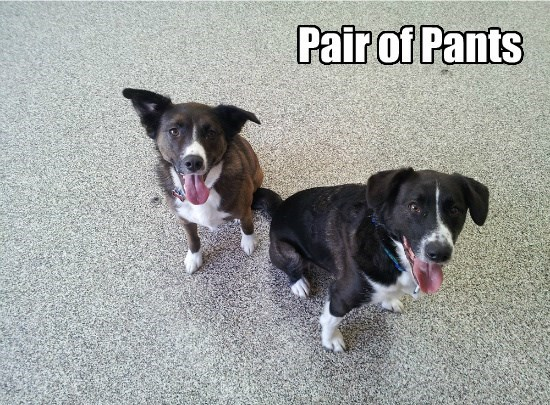 of,dogs,panting,pair,pants,caption