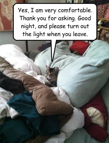cat,out,thank you,turn,please,light,comfortable