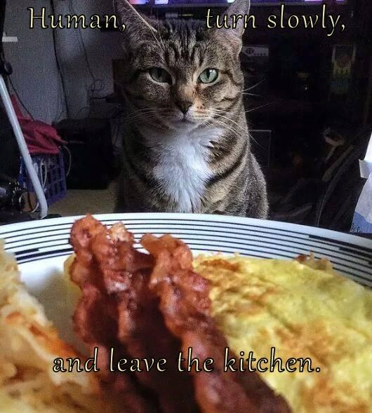 Human, turn slowly, and leave the kitchen.