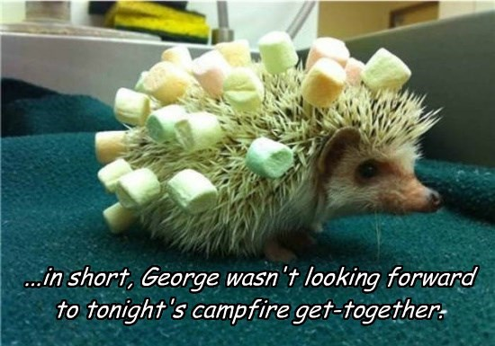 ...in short, George wasn't looking forward to tonight's campfire get-together.