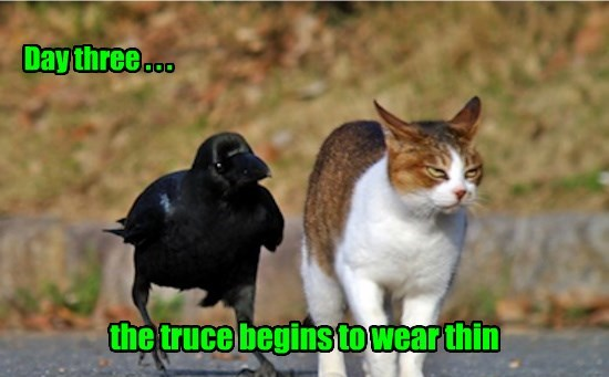the truce begins to wear thin Day three . . .