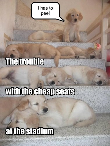puppies,pee,seats,stadium,caption,cheap,trouble