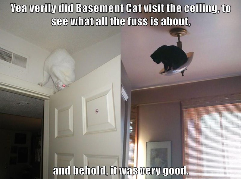 Yea verily did Basement Cat visit the ceiling, to see what all the fuss is about,  and behold, it was very good.