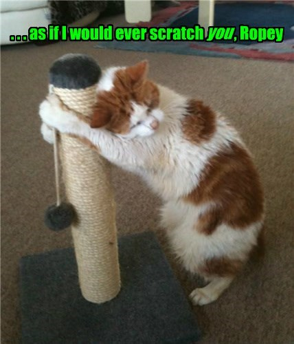 Someone just told Splotchy why he was originally given his favorite hugging pole