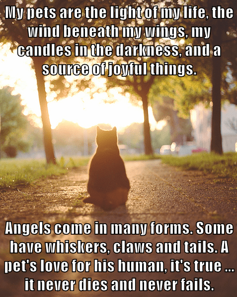 My pets are the light of my life, the wind beneath my wings, my candles in the darkness, and a source of joyful things.  Angels come in many forms. Some have whiskers, claws and tails. A pet's love for his human, it's true ... it never dies and never fail