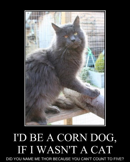 I'D BE A CORN DOG, IF I WASN'T A CAT