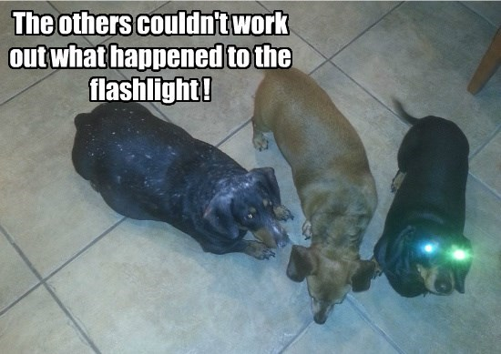dogs,captions,flashlights,funny