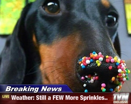 dogs sprinkles captions funny - 8573183744