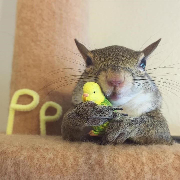Jill the Squirrel makes a perfect pet after escaping a hurricane.