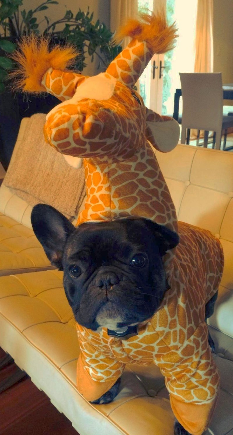 halloween memes cute giraffe puppy