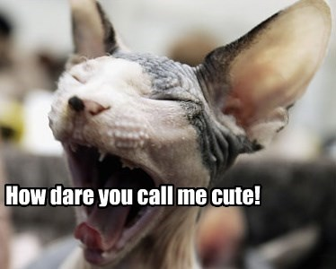 How dare you call me cute!