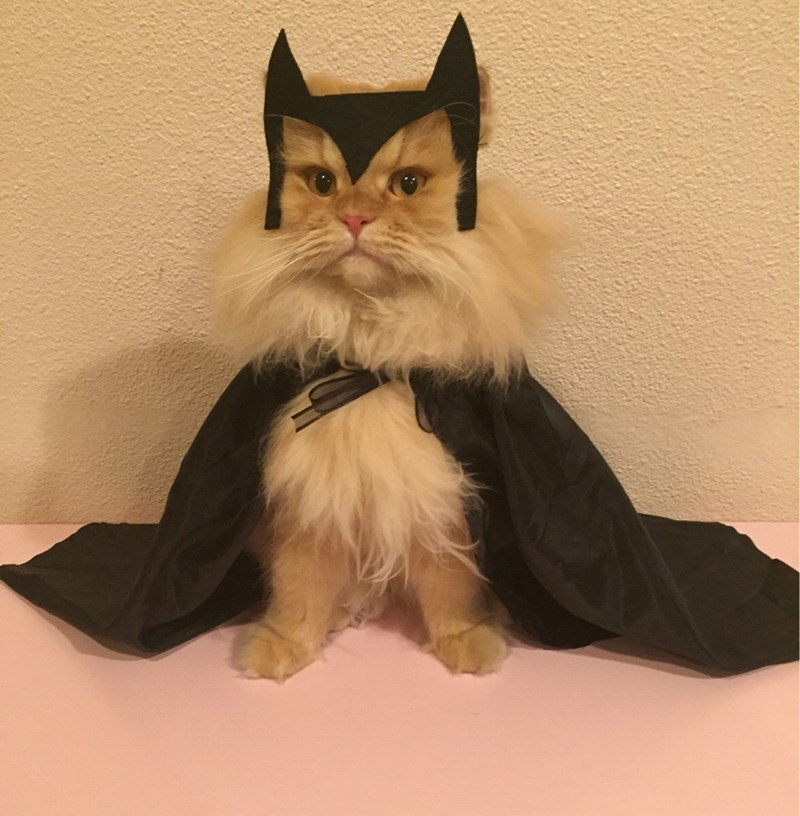 cats halloween costume Fear Me, Human