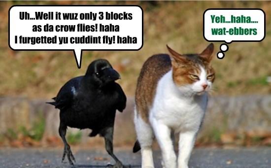 caption Cats funny crow - 8573296896