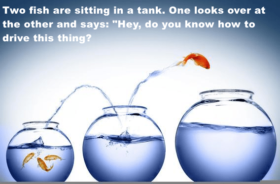 """Two fish are sitting in a tank. One looks over at the other and says: """"Hey, do you know how to drive this thing?"""
