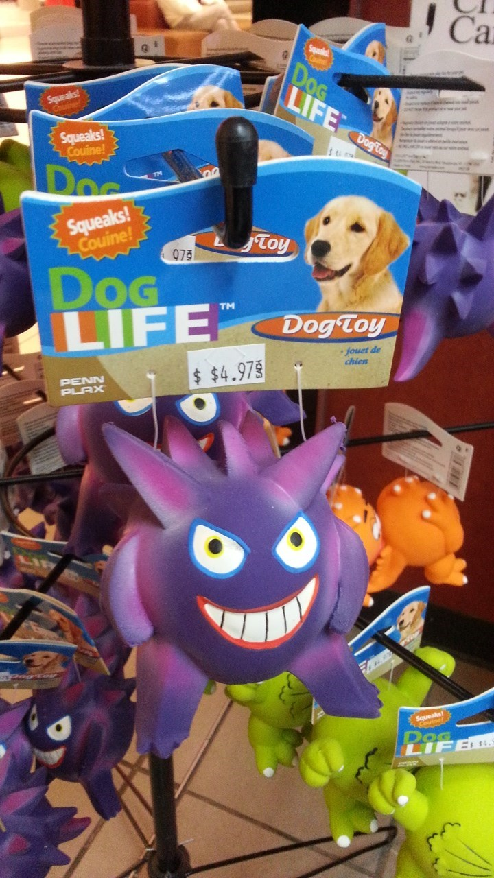 Gengar Wants to Battle Your Dog!