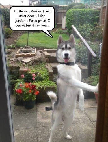dogs garden captions funny - 8573433600